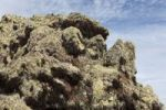 Thumbnail Lichen on lava stone, Majona, La Gomera, Canary Islands, Spain, Europe