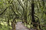 Thumbnail Path leading through a cloud forest, Laguna Grande, Garajonay National Park, La Gomera, Canary Islands, Spain, Europe