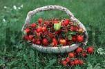 Thumbnail Rose hips in basket