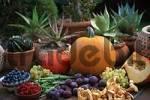 Thumbnail Pumpkins, fruits and chanterelles Cucurbita spec., Cantharellus cibarius