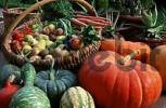 Thumbnail Pumpkins, fruits and vegetables Cucurbita spec.