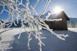 Thumbnail Branch covered with ice crystals, backlighting, in front of Sonnenspitze mountain and a hay shed, Tyrol, Austria, Europe