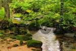 Thumbnail forest brook in Bavaria Germany with mossy rocks