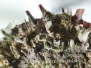 Thumbnail Close-up of an oyster, sediments, macro photography