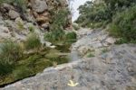 Thumbnail Abundance of water in Quiver Tree Canyon, Naukluft Mountains, Namibia, Africa