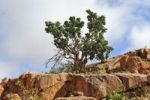 Thumbnail Tree, rocks, Namtib Lodge in the Tiras mountains, Namibia, Africa