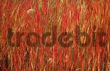 Thumbnail Reed in autumn, Yukon Territory, Canada / Phragmites spec.