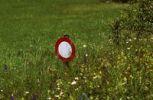 Thumbnail Traffic sign, no transit, in a flower meadow, Val Poschiavo, Graubuenden, Switzerland, Europe