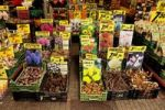 Thumbnail Bulbs at the traditional flower market in the city centre of Amsterdam, Holland, Netherlands, Europe
