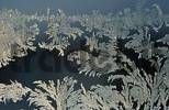 Thumbnail Frost flowers at a window, Bavaria, Germany