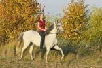 Thumbnail Young horse rider without a saddle toelting on a Paso Fino horse in autumn in the evening