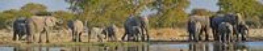 Thumbnail Herd of African Bush Elephants (Loxodonta africana) at the Goas waterhole, Etosha National Park, Namibia, Africa