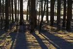 Thumbnail wood forest district of Munich Upper Bavaria Germany trees with snow winter