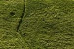 Thumbnail Seaweed on a stone