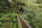 Thumbnail Hiker stading on an aquaduct on a trail along Levada towards Caldeirao Verde, Madeira, Portugal