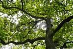 Thumbnail broad-Leafed tree