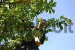 Thumbnail children pick cherries from cherry tree