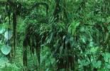 Thumbnail Tropical Rain Forest reserve Monteverde, Costa Rica
