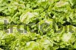Thumbnail salad field