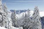 Thumbnail Winter landscape on Wank mountain, near Garmisch-Partenkirchen, in the back the Wettersteingebirge mountain range, Werdenfelser Land, Upper Bavaria, Bavaria, Germany