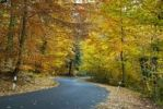 Thumbnail Autumn, road, forest, bend, Hesse, Germany