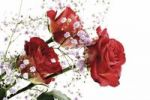 Thumbnail Red roses with Baby's Breath
