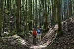 Thumbnail hiker on forest track in Mühlbach , Upper Palatinate Bavaria Germany