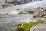Thumbnail Glacier tongue Nigardsbreen, Jostedalsbreen, Sogn og Fjordane, Norway