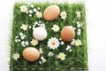 Thumbnail Three brown eggs and a white one on an artificial flower meadow
