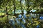 Thumbnail Calm waters, Krka National Park, Dalmatia, Croatia, Europe
