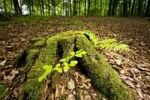 Thumbnail Tree stub on the forest floor