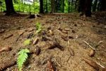 Thumbnail Coniferous forest floor
