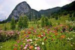 Thumbnail Fertile valley in Triglav National Park in Slovenia