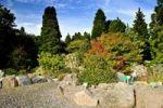 Thumbnail Alpine garden in the Botanical Garden in Copenhagen, Denmark