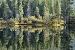 Thumbnail Reflection on the shore of Salmon Lake near Blairsden, North California, USA