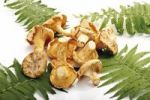 Thumbnail Chanterelle mushrooms with fern leaves