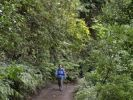 Thumbnail Woman walking through a Laurisilva, El Canal y Los Tilos Biosphere Reserve, La Palma, Canary Islands, Spain