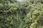 Thumbnail Gorge and a Laurisilva forest, Barranco de la Fuente near San Andrés, La Palma, Canary Islands, Spain