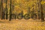 Thumbnail Forest in autumn, North Rhine-Westfalia, Germany