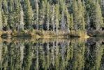Thumbnail Spruce trees (Piceoideae) reflected in the Sardines Lake near Blairsden, North California, USA