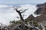 Thumbnail Deadwood, Caldera de Taburiente National Park, La Palma, Canary Islands, Spain