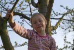 Thumbnail Girl, 6 years, has climbed into a cherry tree