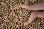 Thumbnail Person checking the quality of wood pellets