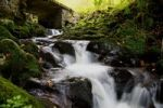 Thumbnail Stream on Mt Feldberg in the Black Forest, Germany, Europe