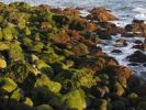 Thumbnail Algae-covered stones on the sea, La Palma, Canary Islands, Spain