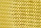 Thumbnail Wax honeycombs freshly prepared by bees, on the base of a prefabricated honeycomb serving as a template
