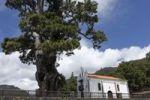 Thumbnail Ermita de la Virgen del Pino Chapel, Canary Island Pine (Pinus canariensis), La Palma, Canary Islands, Spain, Europe