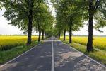 Thumbnail Avenue under linden trees (Tilia), Brandenburg, Germany, Europe