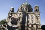 Thumbnail Young pug in front of the cathedral in Berlin, Mitte, Germany, Europe