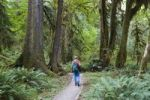 Thumbnail Rainforest, Hoh Rainforest, Olympic National Park, Washington, USA